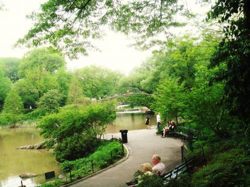 Vegetação e rio no interior do Central Park