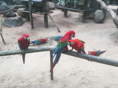 Araras vermelhas no Parque das Aves
