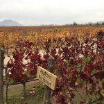 10 razões para fazer o tour à vinícola Concha Y Toro