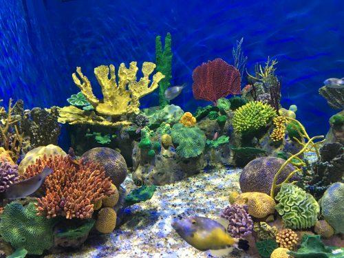 Aquário do AquaRio