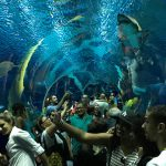 Porto Maravilha: uma visita obrigatória no Rio de Janeiro