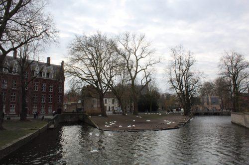 Lago do Amor e cisnes em Bruges