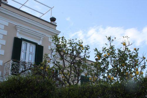 Limão siciliano na janela