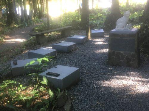 Cemitério de gatos de Blumenau