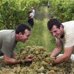 Enotrip em Portugal: de carro, as melhores vinícolas