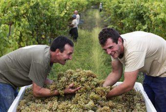 Enotrip em Portugal: as melhores vinícolas