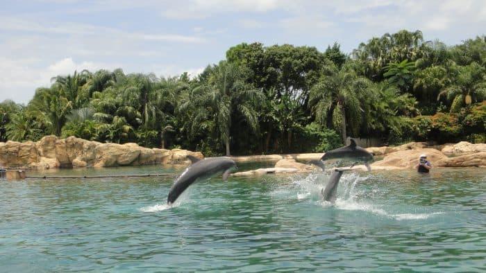 Três golfinhos saltando e vegetação ao fundo
