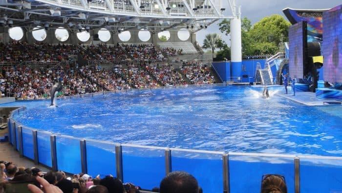 tanque com baleia ao fundo e plateia em arquiancada