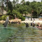 As atrações imperdíveis do Sea World e Discovery Cove
