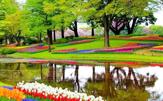 Tulipas coloridas em um parque