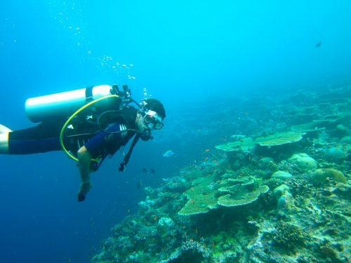 Mergulho nas Maldivas