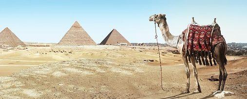 Camelo no deserto com pirâmides ao fundo