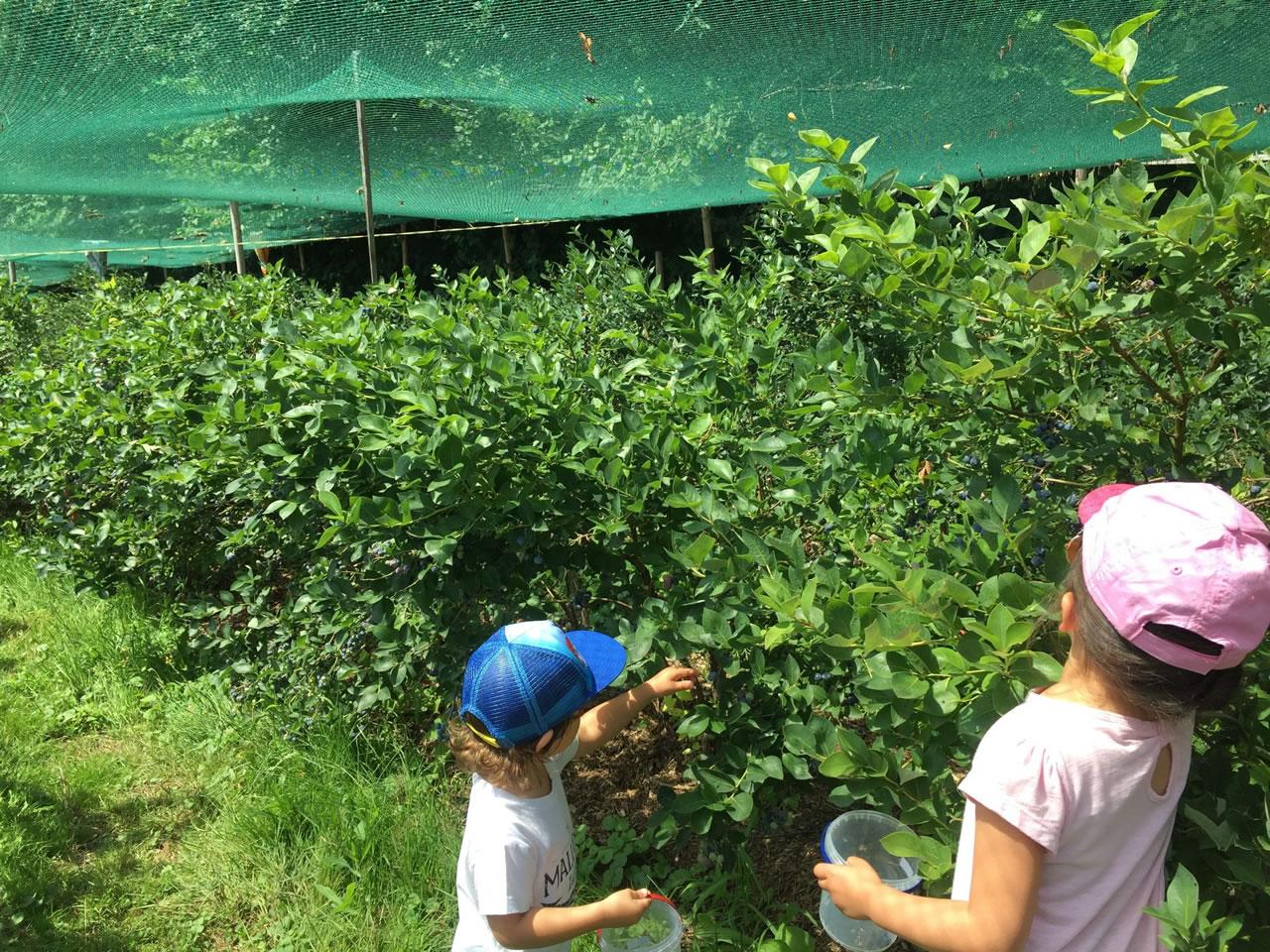 Crianças na colheita