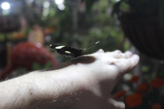 Borboleta na mão de um turista