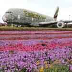 Dubai Miracle Garden: como é, dicas e ingressos