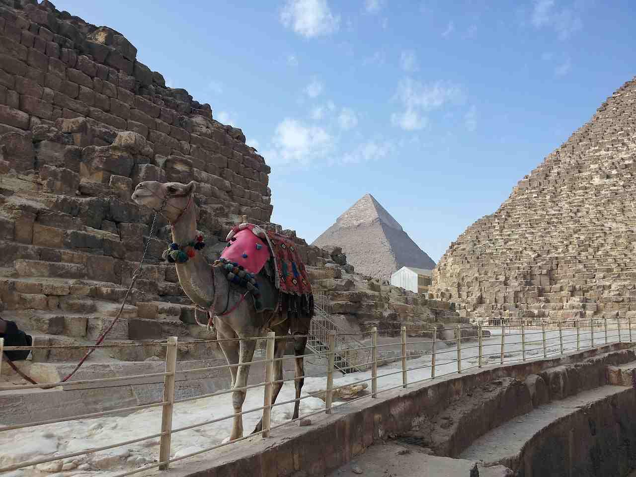 Camelo e as Pirâmides de Gizé