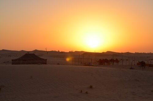 fazenda de camelos Abu Dhabi