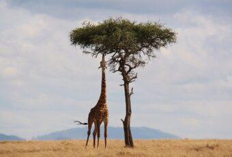África do Sul Essencial: Cape Town, Johannesburg e Kruger National Park (9 dias)